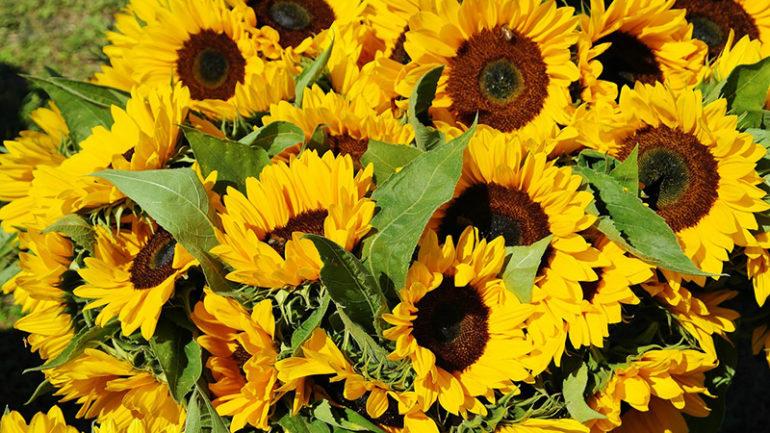 setembro-amarelo-post-1