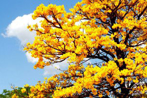 setembro-amarelo-post-2