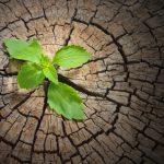 Você sabe o que é resiliência? Você é resiliente?